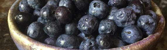 Blueberries – a real super food for good health